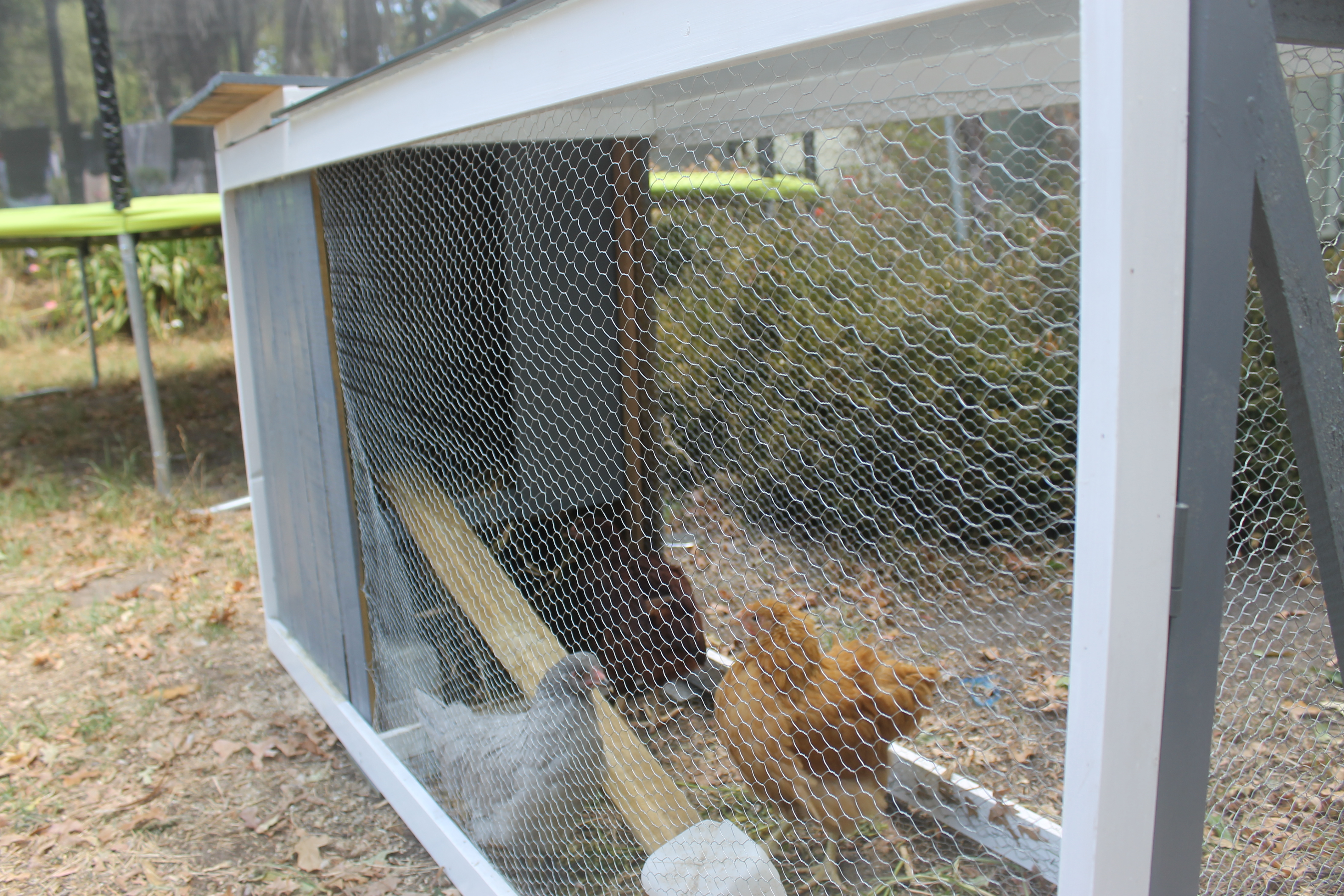 The new chicken house – Urban off gridding